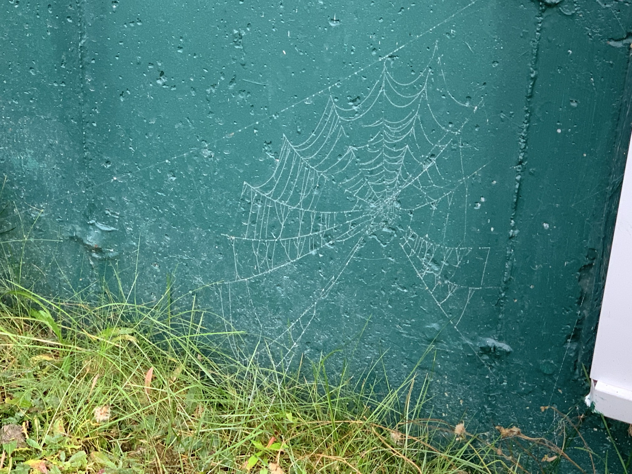 web against green all