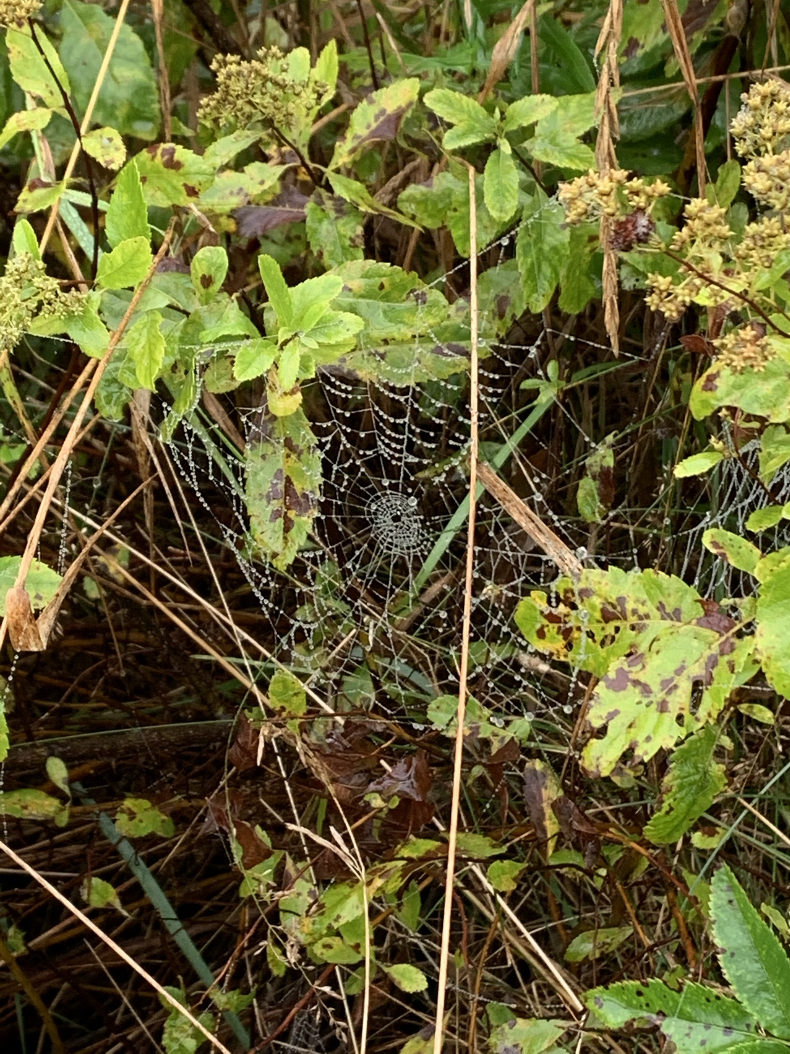 spider web on deck with flowers