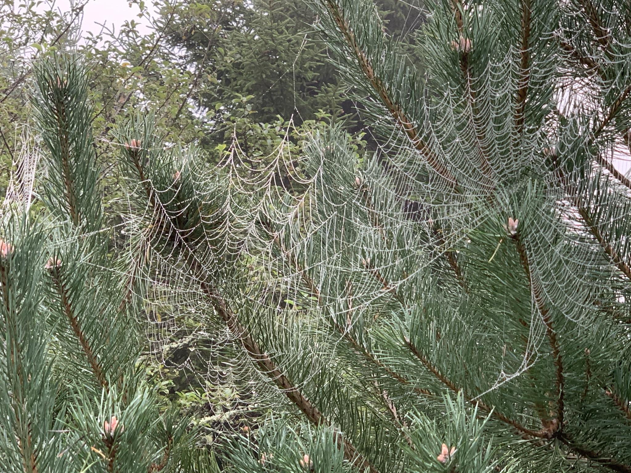 multiple webs in fir